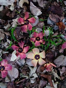 hawaii oahu flowers
