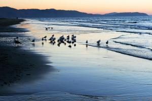 tas nz beach sunset
